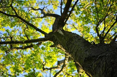 Medžių energetika ir pagalba